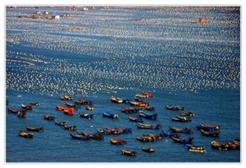 同益海南生态种苗基地海水源热泵恒温项目